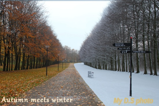 Autumn going to winter in one picture.