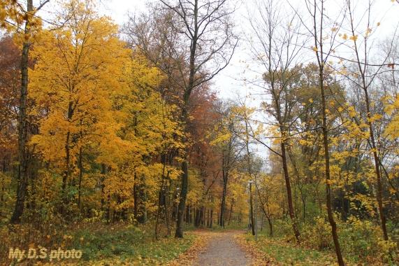 Its nice to walk among these big trees