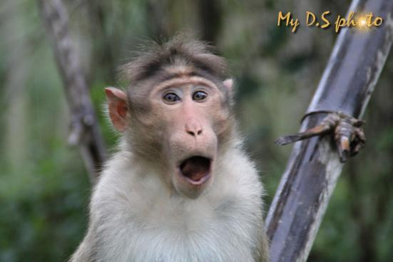 This monkey cannot believe it