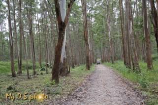 Wayanad park