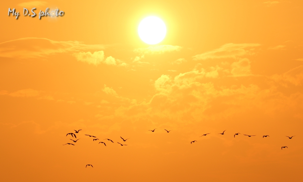 Sunset in Bundala National Park